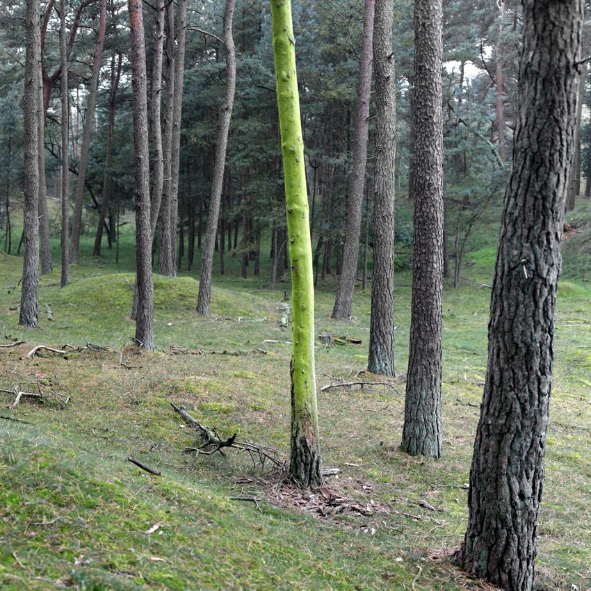 Groene stam