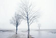 Winterbomen drie