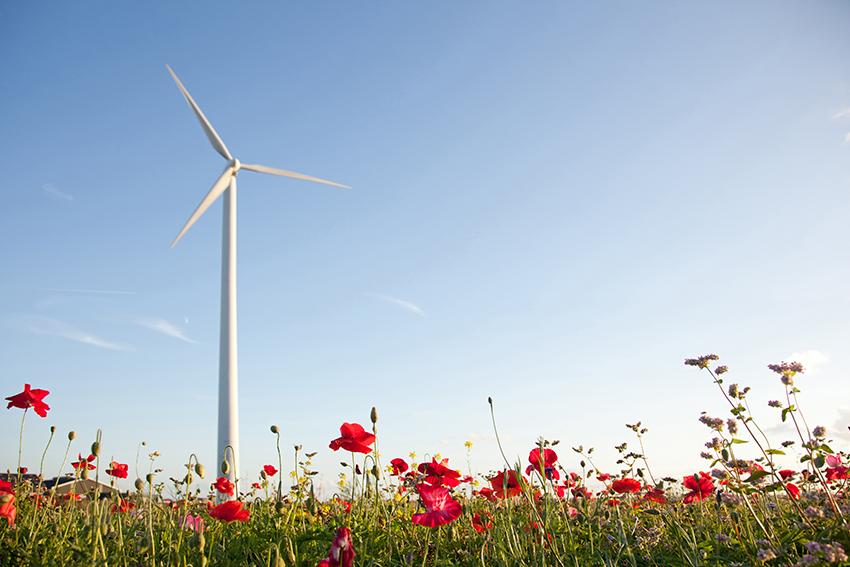 Windturbine en klaprozen