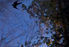 Nocturne 11 bird