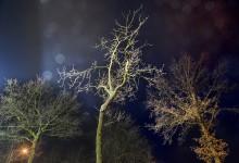 Nocturne 4 griffensteyn