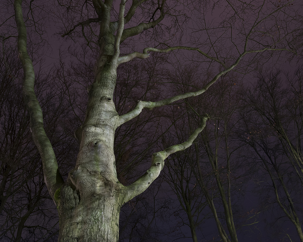 Nocturne 6 beech
