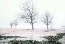 Winterbomen één