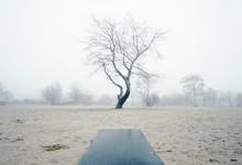 Winterbomen twee
