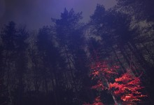 Nocturne 10 red beech