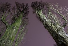 Nocturne 8 two trees
