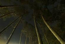 Nocturne 9 hilversum